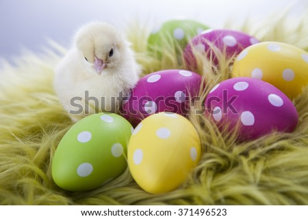 Easter chicken, eggs and decoration in vintage wooden background