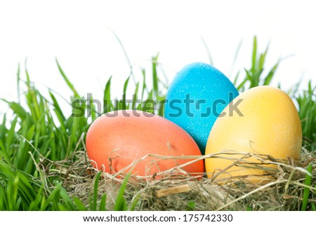 easter color eggs in nest on green grass over white background