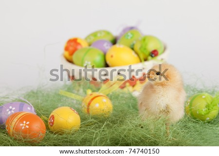 Easter concept image. Closeup shot of one adorable yellow baby chicken surrounded by fake grass and colorful painted eggs. High resolution image taken in studio. - stock photo