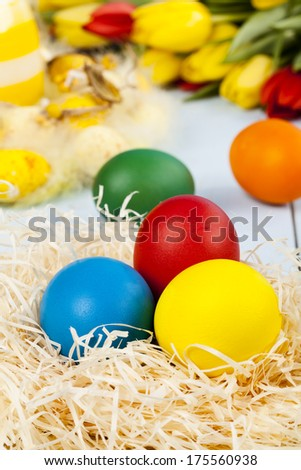 Easter decoration with tulip and colored eggs on blue boards