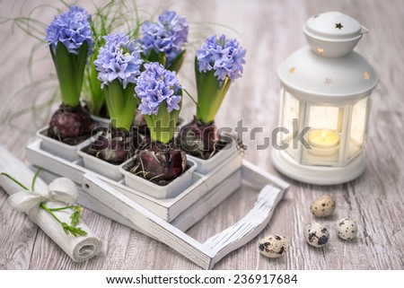 Easter decorations with blue hyacinth flowers and quail eggs - stock photo