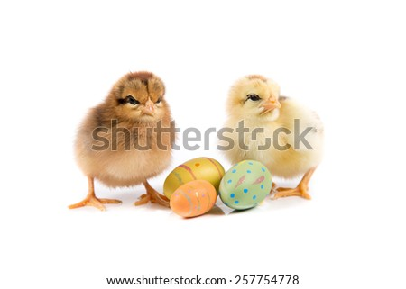 Easter, Easter Chicken, Easter Eggs, Easter card on white background isolated - stock photo