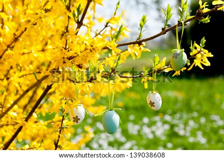 easter egg decoration hanging on forsythia tree outdoor in spring - stock photo