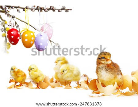 easter eggs and chickens  - stock photo