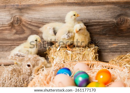 Easter eggs and chicks in a easter nest.