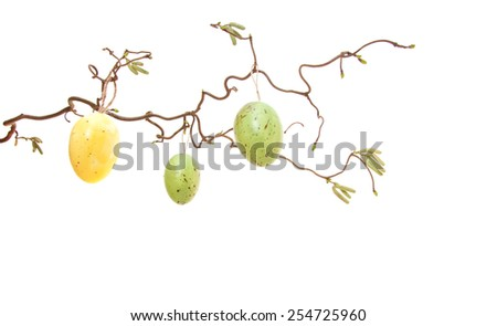 Easter eggs hanging on bush. All on white background. - stock photo