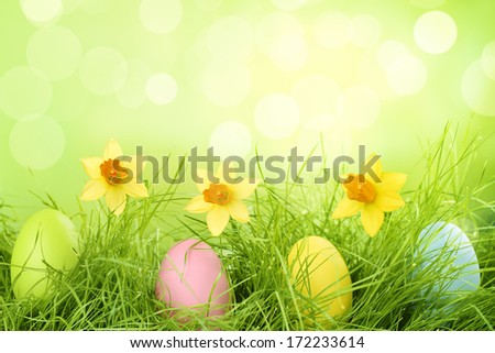 Easter eggs hiding in the grass with daffodil