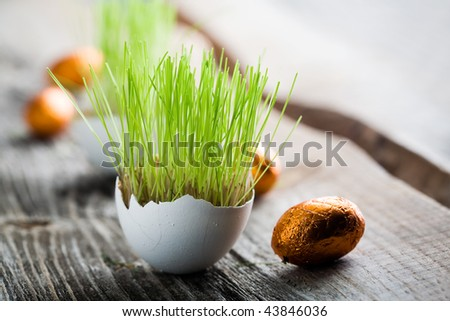Easter grass growing in egg shell, shallow focus - stock photo