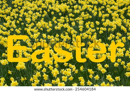 Easter in yellow with daffodil background - stock photo