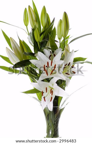 Easter lilies on white background - stock photo
