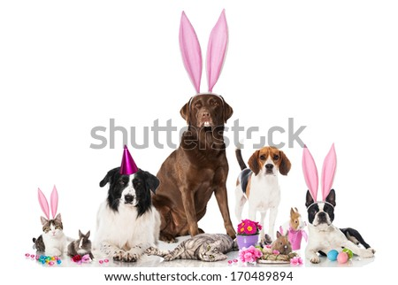 Easter pets - stock photo