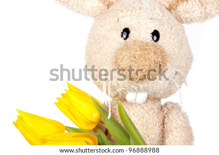 Easter Rabbit close-up