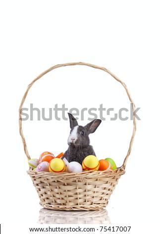 Easter rabbit inside a basket full of easter eggs  (isolated on white) - stock photo