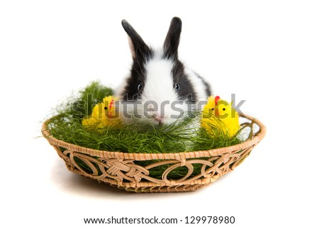 Easter rabbit with chicks inside basket, isolated on white background - stock photo
