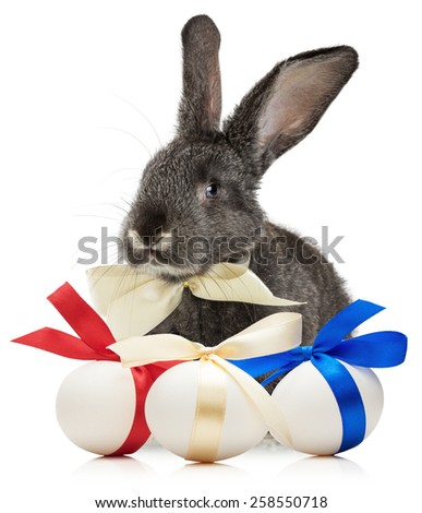 Easter rabbit with eggs isolated on white background - stock photo