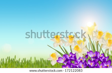 Easter/spring background. Flowers, fresh grass against blue sky. Easter greeting card. Abstract background. Selective focus.