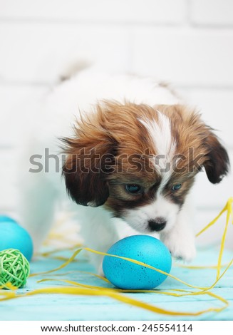 Easter still life, puppy playing with eggs - stock photo