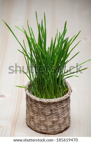 Easter still life with grass in a small basket. Colored background.