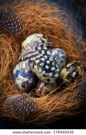 Easter still life with quail eggs in nest