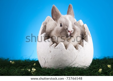 Easter. The bunny - stock photo