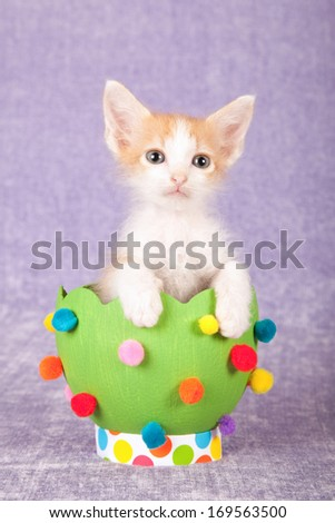 Easter theme Chinchilla kitten sitting next to green easter egg decorated with pom pom against cerise pink background - stock photo