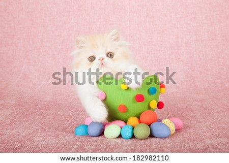 Easter theme Persian kitten sitting inside large Easter egg with small easter eggs on pink background - stock photo