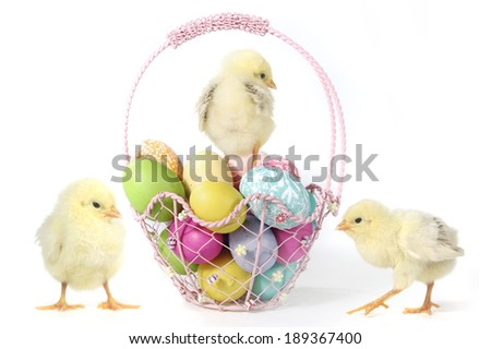 Easter Themed Image With Baby Chicks and Eggs - stock photo