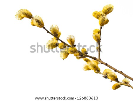 Easter willow branches - stock photo
