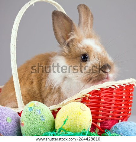 Easter Young Rabbit - Bunny posing in easter woven basket. Easter concept. Small depth of field - stock photo