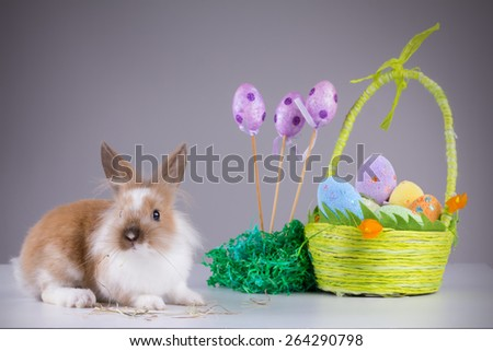 Easter Young Rabbit - Bunny posing with grass in the mouth in front of Easter eggs. - stock photo