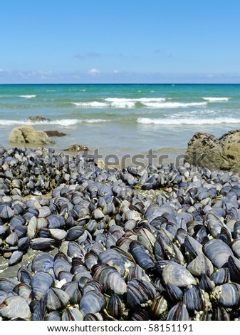 eatable mussels on a rock and sea coast - stock photo