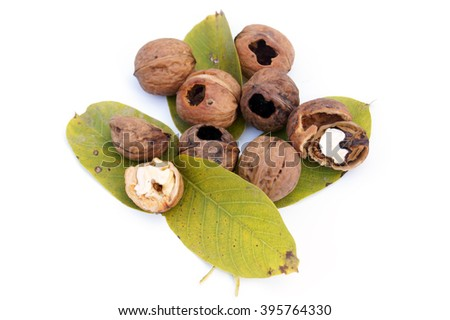 Eaten walnuts lying on walnuts' leaves- isolated on white         - stock photo