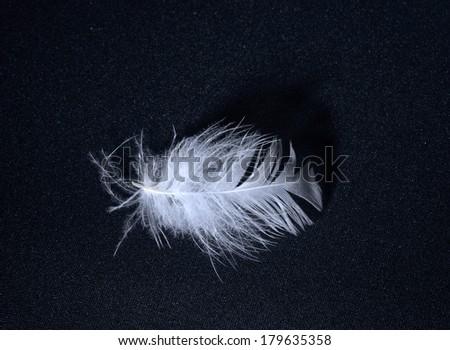 eather isolated on black background  - stock photo