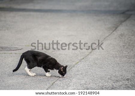 Eating cat on the street asphalt - stock photo