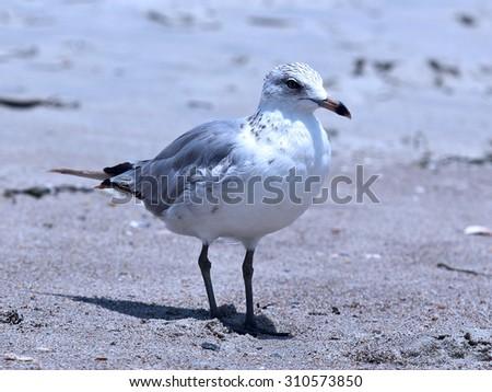 ebb tide - stock photo