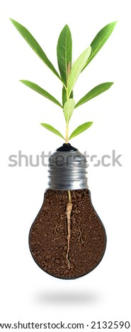 Eco concept: green tree growing out of a bulb. - stock photo