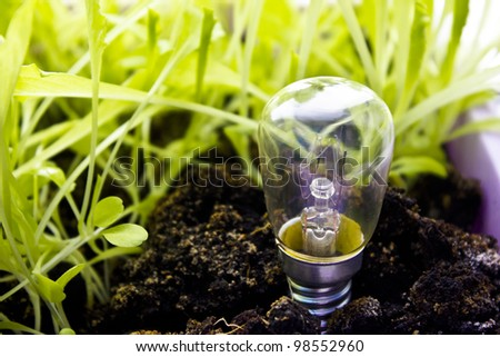 Eco concept - light bulb grow with the grass