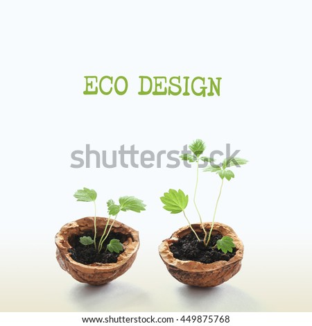 Eco design original concept, green sprouts in a walnut shells. macro view growing plants, pattern and texture leaves, nut shell. Gradient white beige background, soft focus