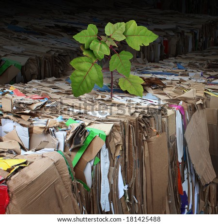 Eco friendly tree and renewable resources concept as recycling of compressed corrugated cardboard and paper with a tree sapling sprouting from the used garbage as a metaphor for global energy hope. - stock photo
