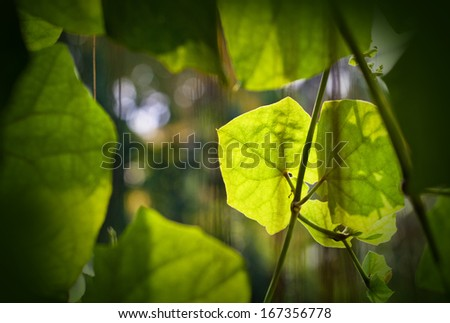 Eco nature / green and blue abstract defocused background  - stock photo