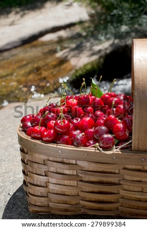 Ecological fresh sweet ripe cherries from Valle del Jerte in Spain, in a wicker basket. - stock photo