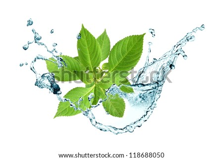 Ecology concept.Abstract composition with green leaves and splashing water - stock photo