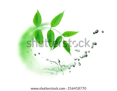 Ecology concept. Abstract composition with green leaves and splashing water - stock photo