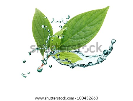 Ecology concept. Green leaves with splashing water on white background - stock photo
