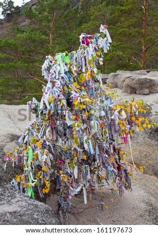 Ecology concept: people tied colored ribbons on trees in accordance with the ancient tradition. Canon 5D Mk II.
