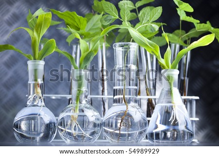 Ecology laboratory experiment - stock photo