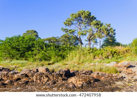 Edge coastline with seaweed on the sea rocks, and grass and trees growing on the land area