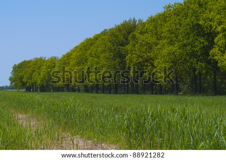 Edge of a lush green forest with a bright blue sky. Situated in front of the woods is a rich meadow and a farm road. - stock photo