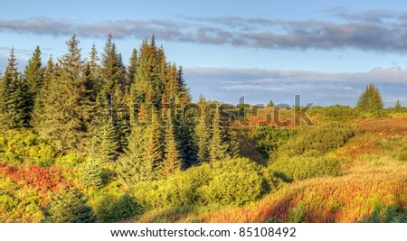 Edge of an Alaskan spruce forest with fall colors in the warm evening light - stock photo