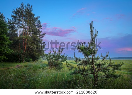 edge of the forest in the early evening - stock photo